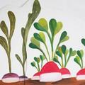 Décor de radis et navets - En tout, 7 décors reprenant les fruits et légumes du jardin de Pomelo.