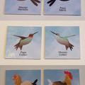Paires de cartes associant les oiseaux mâles et femelles.